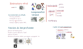 estructura virus