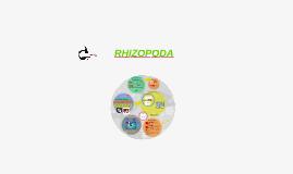 Copy of Rhizopoda