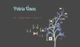 Pelvis Ósea