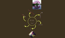 El roble flor morado o guayacán rosado