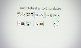 Invertebrates to Chordates