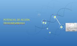POTENCIAL DE ACCIÓN TRANSMEMBRANA