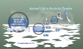 Copy of ANIMAL LIFE IN ARCTIC TUNDRA