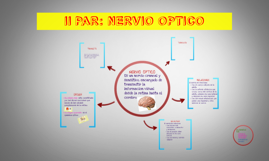 II PAR: NERVIO OPTICO