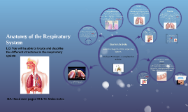BTEC3 L7 Anatomy of the Respiratory System