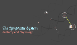 Copy of Copy of The Lymphatic System