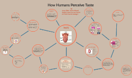 How Humans Perceive Taste