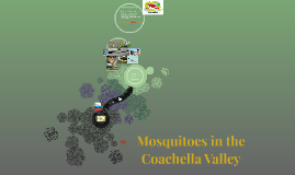 Mosquitoes in the Coachella Valley