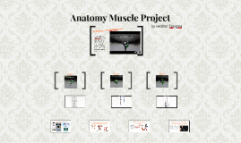 Anatomy Muscle Project
