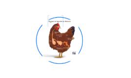 Copy of Digestive System a chicken