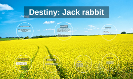 destiny/jack rabbit
