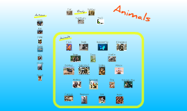 Animals-basic