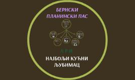 БЕРНСКИ ПЛАНИНСКИ ПАС