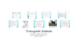Copy of Biotech Project - Transgenic Animals