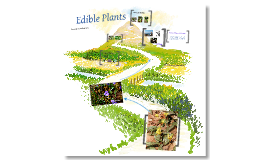 Copy of Edible Plants