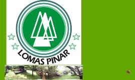 Copy of Cultura Organizacional de Campamento Lomas Pinar