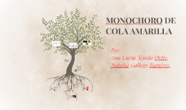 MONOCHORO DE COLA AMARILLA