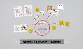 Nervous System -- PNS