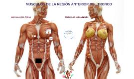 TRABAJO ANATOMÍA: Músculos de la región anterior del tronco