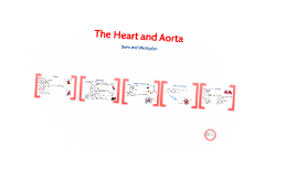 The Heart and Aorta