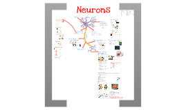 AP Bio- Physiology 7: Neurons