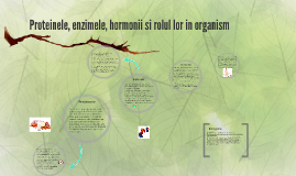 Proteinele, enzimele, hormonii si rolul lor in organism