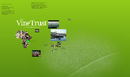 Copy of Vine Trust