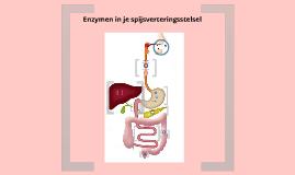 enzymen in het spijsverteringsstelsel