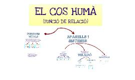 EL COS HUMÀ (FUNCIÓ DE RELACIÓ)