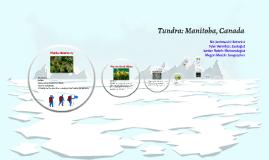 Tundra: Manitoba, Canada