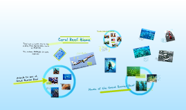 Copy of Coral Reef Biome