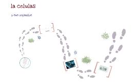 Copy of organelos celulares