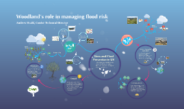 Productive Woodland and Flooding in UK (APPG version)
