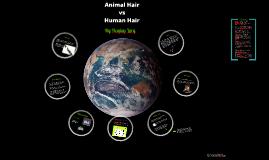 Copy of Animal Hair vs Human Hair