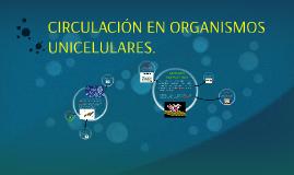 CIRCULACIÓN ORGANISMOS UNICELULARES.