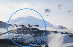 Tundra Biome