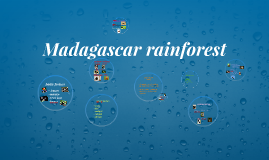 Copy of Madagascar rainforest