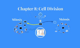 Chapter 8 (part 1): Mitosis