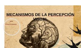 MECANISMOS DE LA PERCEPCIÓN VISUAL