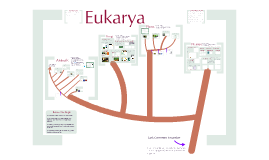 Lecture Notes on Bio-Biodiversity 3: The Eukarya