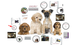 Copy of Animal Cruelty in the United States: A Closer Look at Puppy Mills and Animal Hoarding