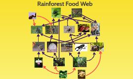 Rain Forest Food Web