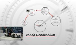 Vanda Dendrobium