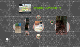 Copy of Reptile Adventure