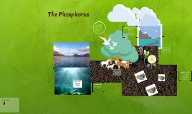The Phosphorus