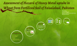 Assessment of Hazard of Heavy Metal uptake in Wheat from Fer