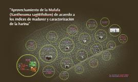 """""""Aprovechamiento de la Mafafa (Xanthosoma sagittifolium) de"""