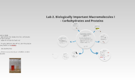 Lab 2. Biologically Important Macromolecules