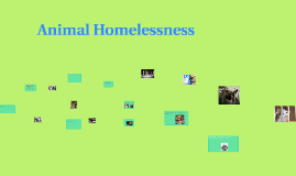 Animal Homelessness