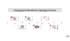 A Evolução da Mandíbula e Dentição Humana
